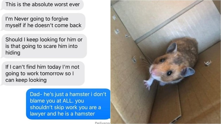 Hamster Live Chat photo 8