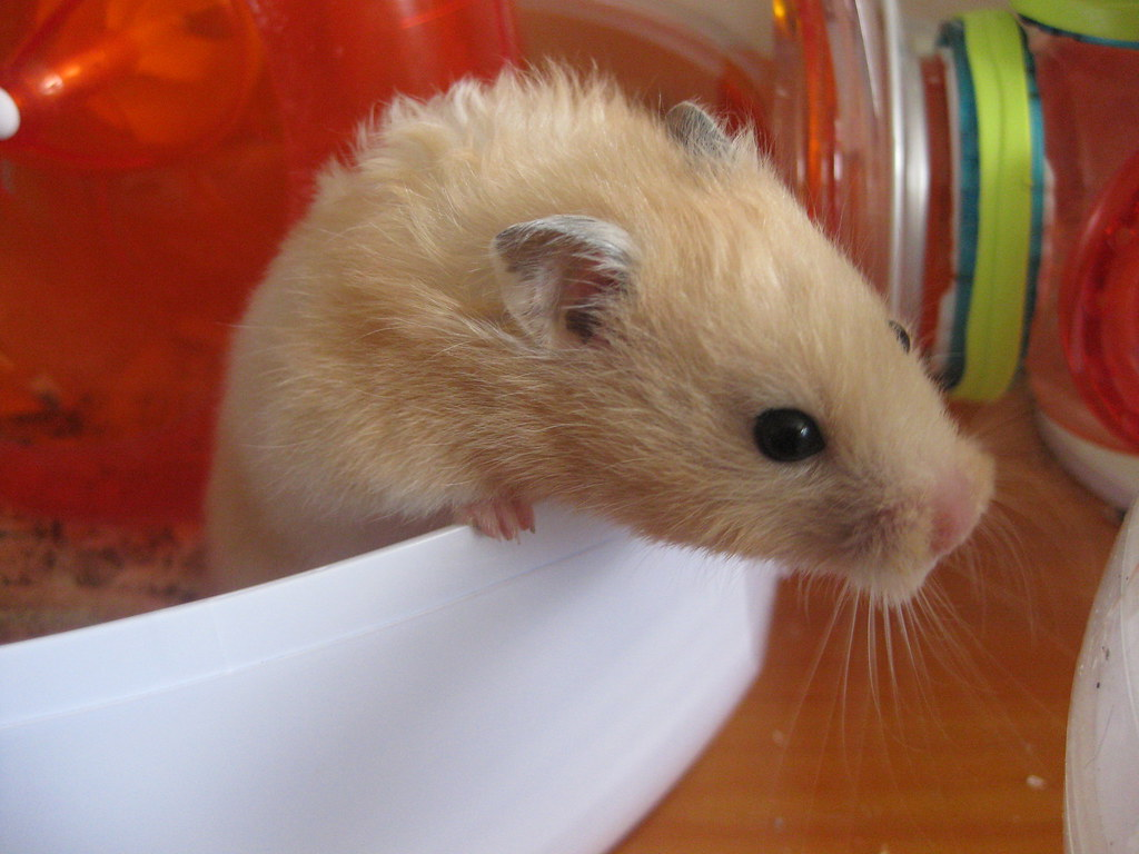 Hamster Live Chat photo 2